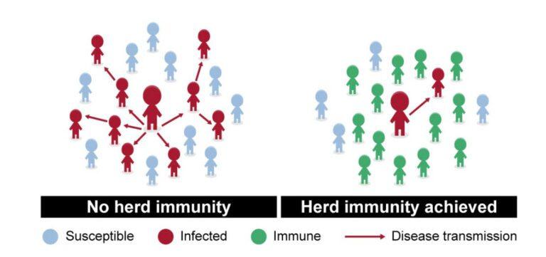 Graphic of Herd Immunity